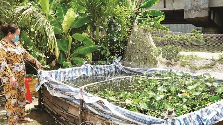 Cà Mau: An cư miền biển