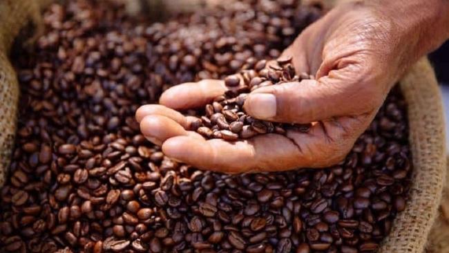 Giá cà phê hôm nay 9/6: Quay đầu giảm rất mạnh trên các sàn thế giới