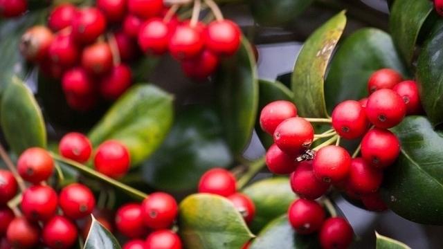 Giá cà phê hôm nay 26/7: Arabica đang cao nhất trong 6,5 năm qua, hướng đi nào cho cà phê tuần này?