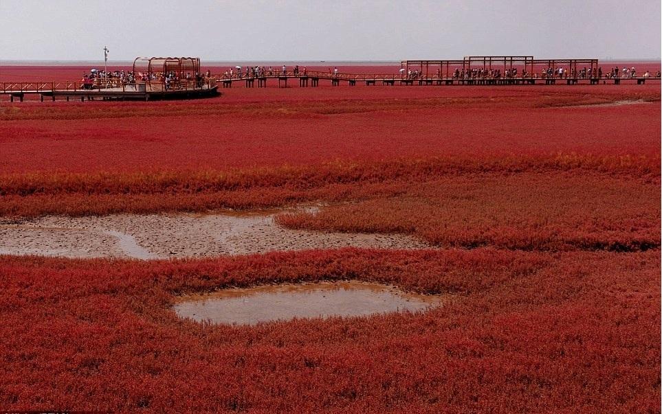 Mùa thu này, đến Trung Quốc để chiêm ngưỡng bãi biển đỏ Panjin