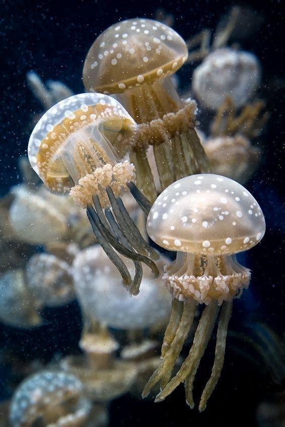 Vẻ đẹp có 1-0-2 dưới đáy đại dương (Phần I)