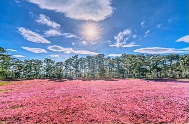Khám phá hai Đồi cỏ hồng đẹp nhất Đà Lạt