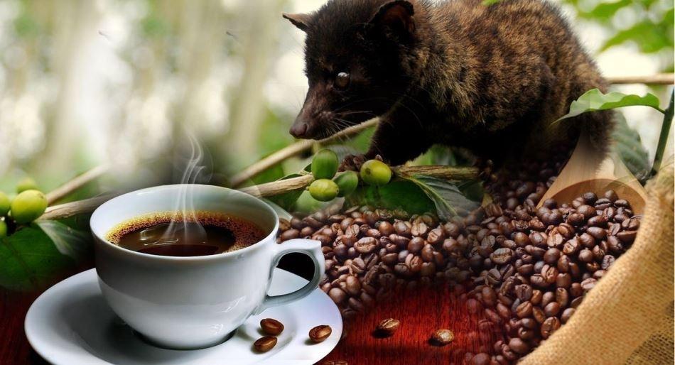 Đâu là loại cà phê đắt nhất thế giới hiện nay?