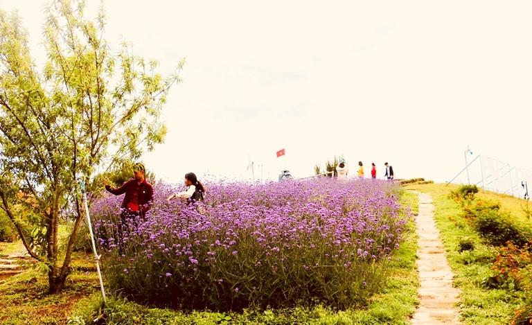 Điện Biên: Pha Đin Pass - Điểm dừng thơ mộng trên đèo Pha Đin
