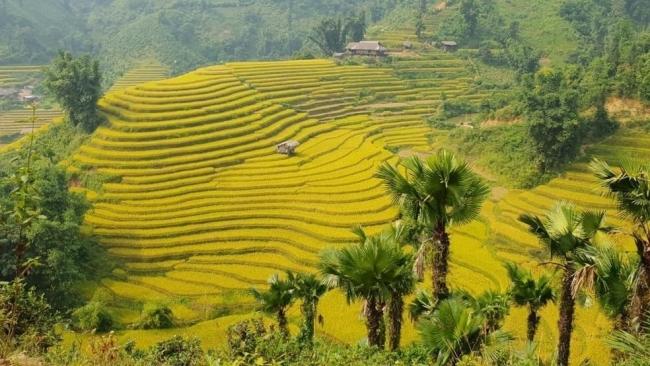 Lào Cai: Bắc Hà miền đất yêu thương