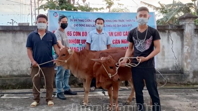 Điện Biên: Hỗ trợ bò giống cho 65 hộ nghèo huyện Điện Biên Đông